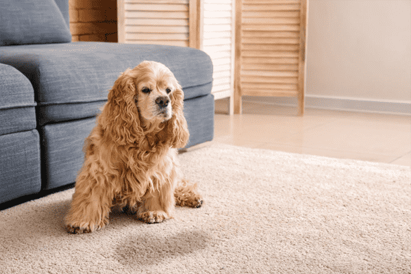 pet odor removal roseville