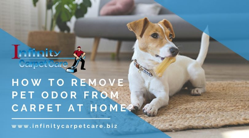 Pet Odor Removal Companies Roseville CA