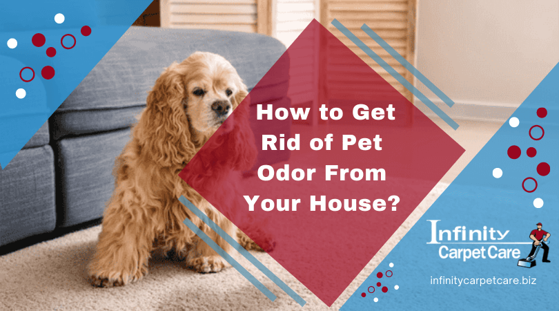 How to Get Rid of Pet Odor From Your House?