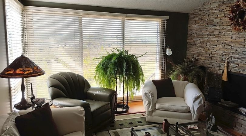 Upholstery Cleaning Services in Roseville CA