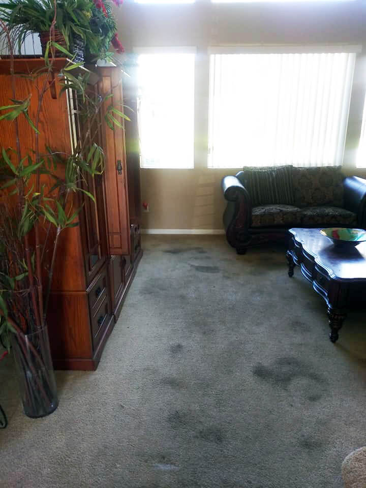 Before Carpet Cleaning By Infinity Carpet Care