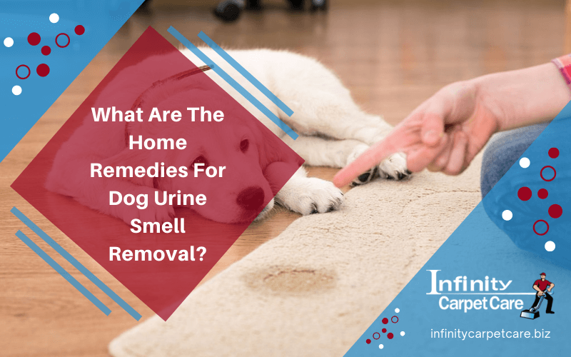 What Are The Home Remedies For Dog Urine Smell Removal?